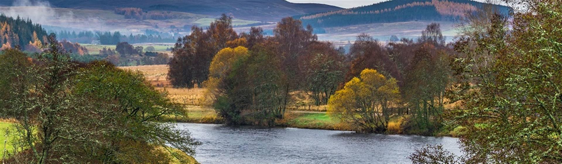 Wild about Scotland